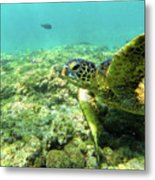 Sea Turtle #2 Metal Print