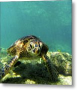Sea Turtle #3 Metal Print