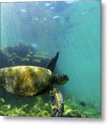 Sea Turtle #5 Metal Print