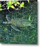 Sea Turtle In Galapagos Lagoon Metal Print