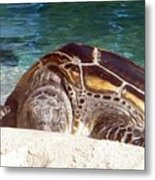 Sea Turtle Resting Metal Print