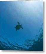 Sea Turtle Silhouette Metal Print
