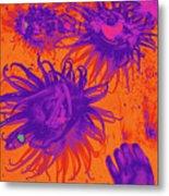 Sea Urchin 14 Metal Print