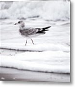 Seabird  Metal Print