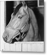 Seabiscuit 1933-1947, In His Stall Metal Print