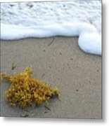 Seafoam And Seaweed Metal Print