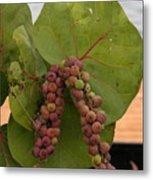 Seagrape Fruits Metal Print