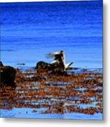 Seagul Landing Metal Print