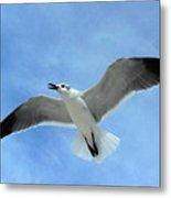 Seagull #1 Metal Print