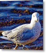 Seagull 1 Metal Print