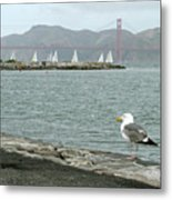 Seagull And Golden Gate Bridge Metal Print