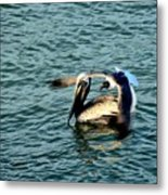 Seagull And Pelican Metal Print