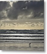 Seagull At Cannon Beach Metal Print