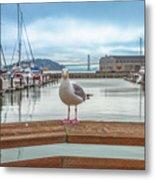 Seagull At Pier 39 Metal Print