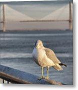 Seagull At Ravenel Bridge Metal Print