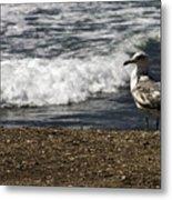 Seagull At The Beach Metal Print