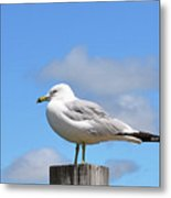 Seagull Beach Art - Sitting Pretty - Sharon Cummings Metal Print