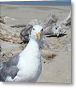 Seagull Bird Art Prints Coastal Beach Driftwood Metal Print