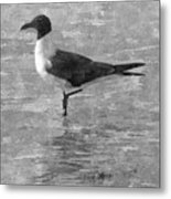 Seagull Black And White Metal Print