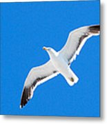 Seagull Blue Metal Print by Cesar Marino