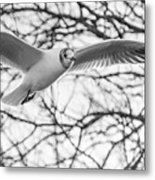Seagull Fly By Trees Metal Print