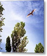 Seagull Fly By Wc 2 Ae  Metal Print