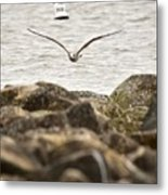 Seagull Flying Into Ocean Jetty Metal Print
