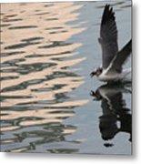 Seagull Fun Metal Print