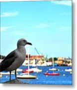 Seagull In Boston Harbor Metal Print