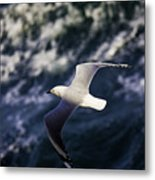 Seagull In Wake Metal Print
