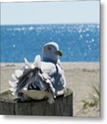 Seagull In Wind Metal Print