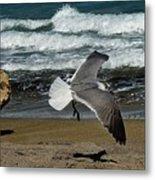 Seagull Landing Hutchinson Island, Fl Metal Print