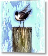 Seagull - Laughing Gull Pop Art  Metal Print