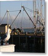 Seagull Morro Bay California Metal Print