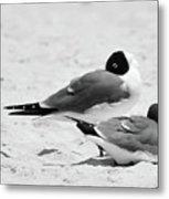 Seagull Nap Time Metal Print