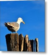 Seagull On A Dock 2 Metal Print