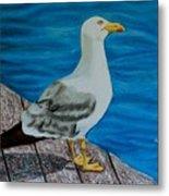Seagull On The Shore - Gaviota En La Costa Metal Print