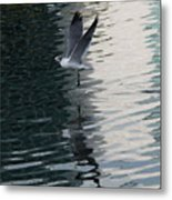Seagull Reflection Over Blue Bay Metal Print
