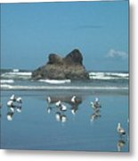Seagull Reflections Metal Print