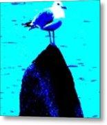 Seagull Scout Metal Print