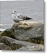Seagull Sitting On Jetty Metal Print