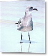Seagull Stance Metal Print
