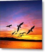 Seagull Sunset   Metal Print