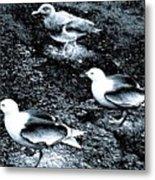 Seagull Trio Metal Print