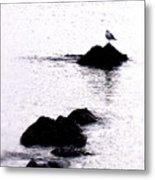 Seagull Waiting Metal Print