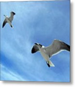Seagulls # 6 Metal Print