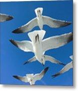 Seagulls #4 Metal Print