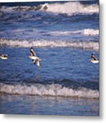 Seagulls Above The Seashore Metal Print