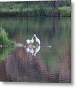 Seagulls At Lake Metal Print