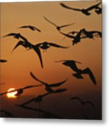 Seagulls In Sunset Metal Print